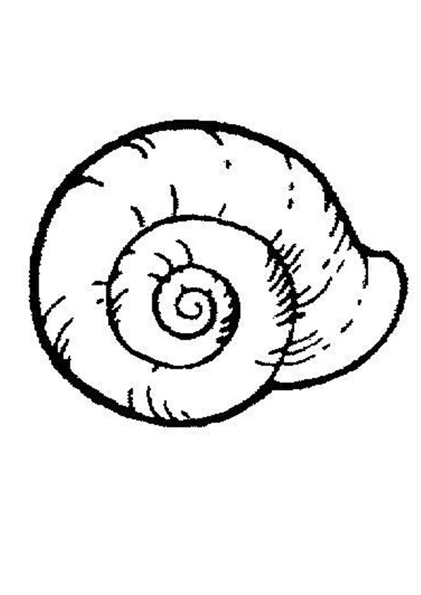 sea snail coloring pages  hellokids