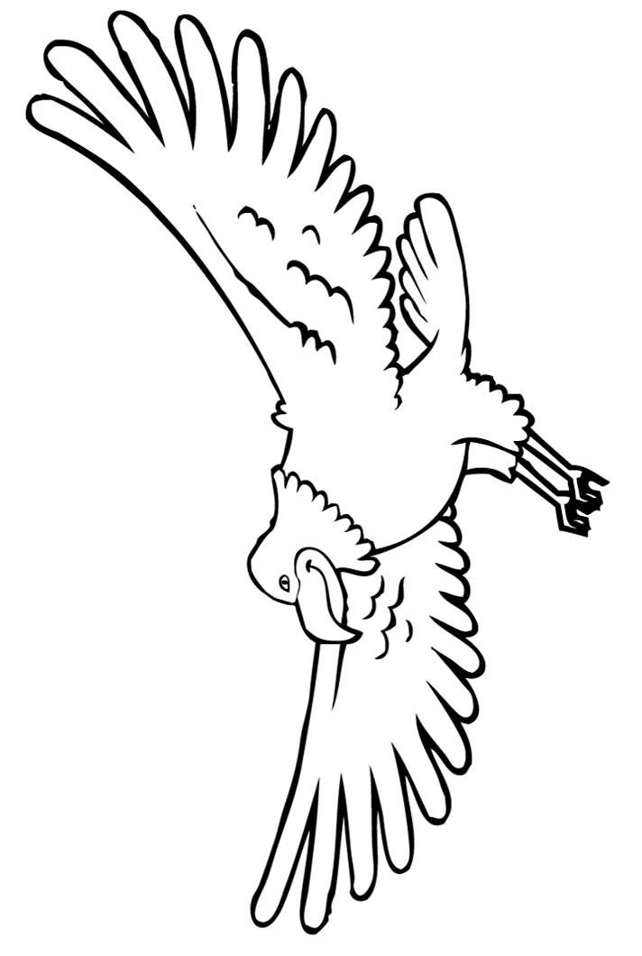 Bald Eagle Free Printable