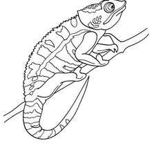 Chameleon : Coloring pages, Videos for kids, Kids Crafts
