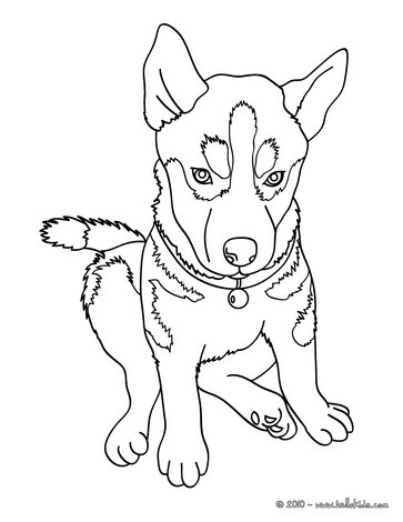 HUSKY DOG COLORING PAGES « Free Coloring Pages