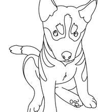 Puppy : Coloring pages, Free Online Games, Reading
