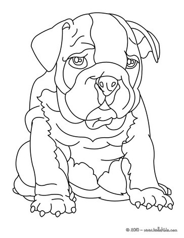 Bull Dog Coloring Page : coloring, Bulldog, Coloring, Pages, Hellokids.com