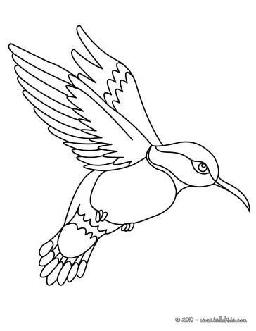 Colibri coloring pages - Hellokids