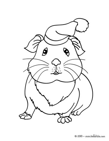 guinea pig coloring page # 14