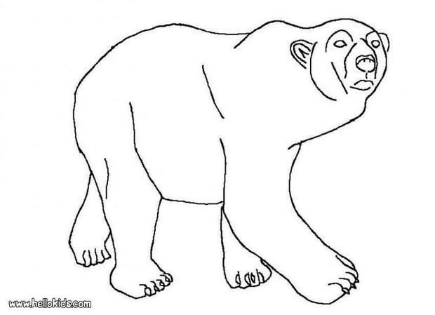 Polar Bear Printable Coloring Pages Hellokids Com