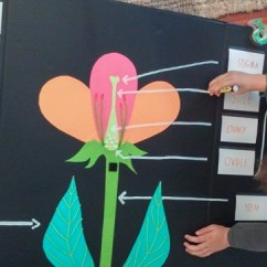 Parts Of A Flowering Plant Diagram 2 Way Switch Light Wiring Science: Flower Anatomy 3d Project Stories To Read - Hellokids.com