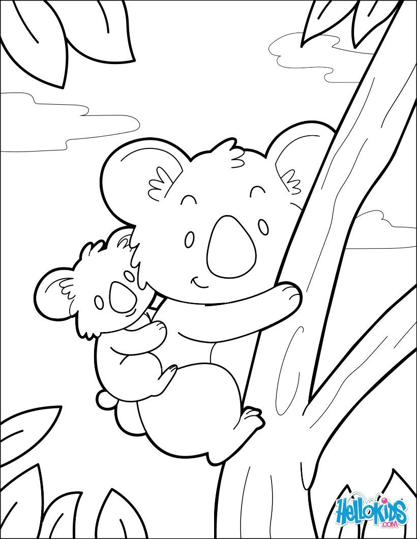 Koala coloring pages - Hellokids