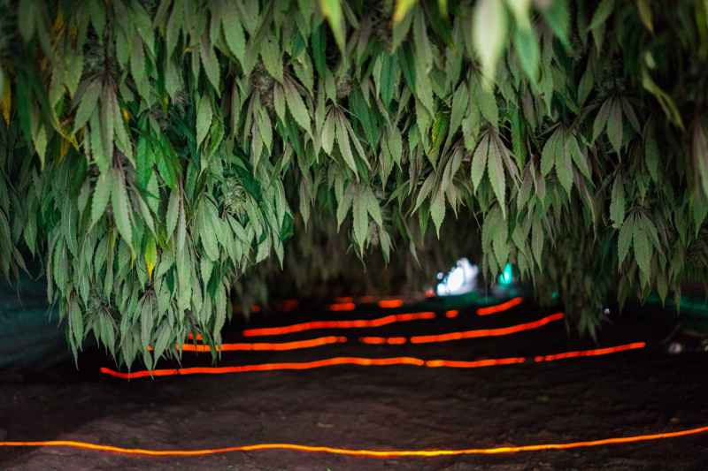Nicolas Enriquez Marijuana   13 Aquaponics is the Future of Growing Weed