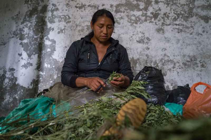 Nicolas Enriquez Marijuana   30 Aquaponics is the Future of Growing Weed