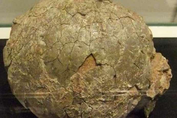 गुजरात के माहीसागर में मिला डायनासोर का अंडा