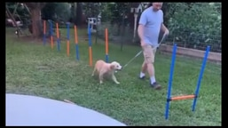 The image shows the doggo going around the obstacle course.