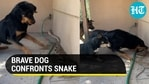 Dog bravely confronts snake to protect its human and a kitten