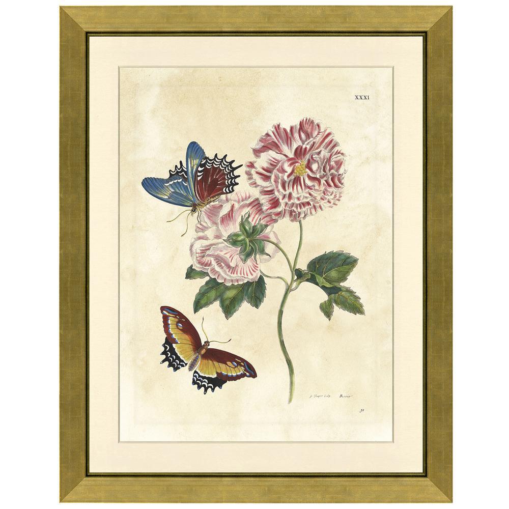 vintage print gallery butterflies