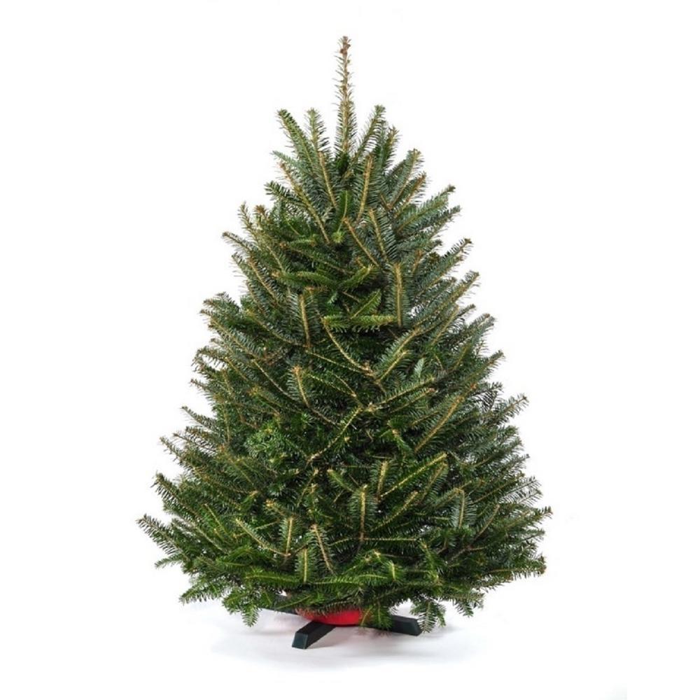 Real Christmas Trees Christmas Trees The Home Depot