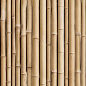 national geographic bamboo wallpaper