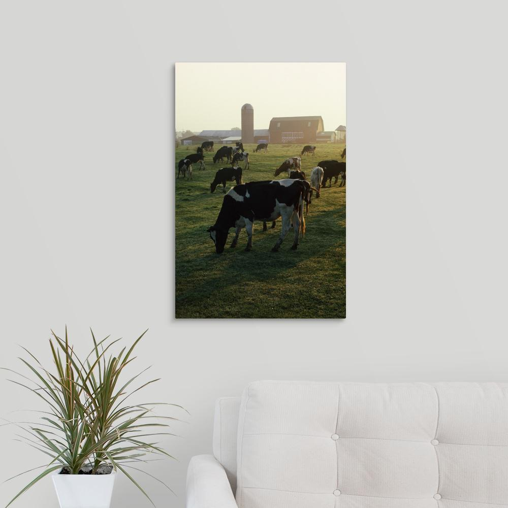 spiers sofa review nantucket greatbigcanvas dairy cattle grazing by david spier canvas wall art