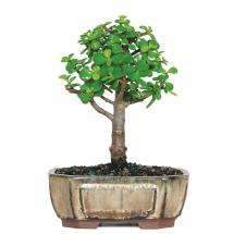 Bonsai Plant Pots Home Depot - Year of Clean Water