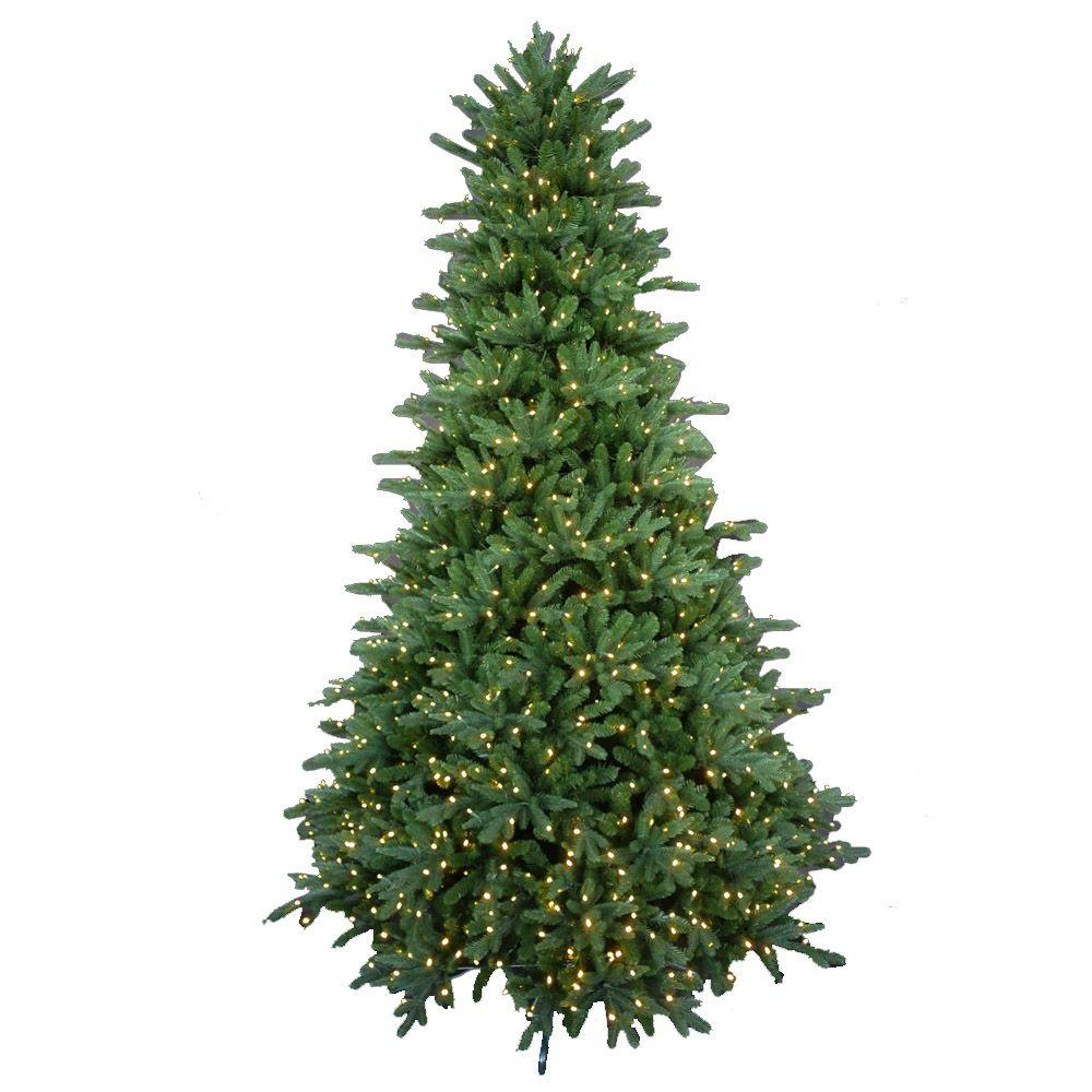 European Cypress Tree Indoor Plant