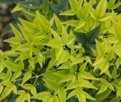 bright green foliage plants