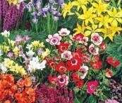 summer flowers for garden