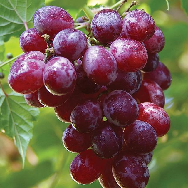 Image result wey dey for grapes