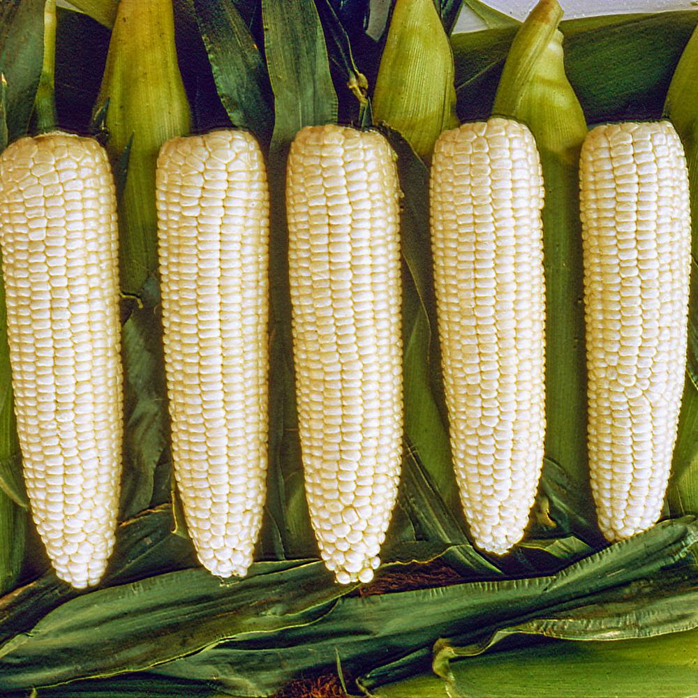 gurney s sweet corn