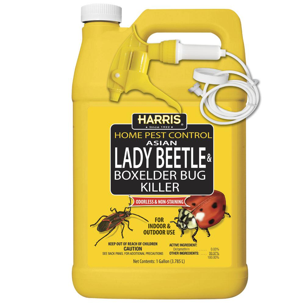 hight resolution of asian lady beetle and box elder bug killer