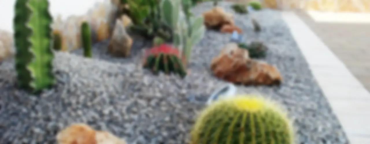11 Sensationelle Ideen Für Steinbeete