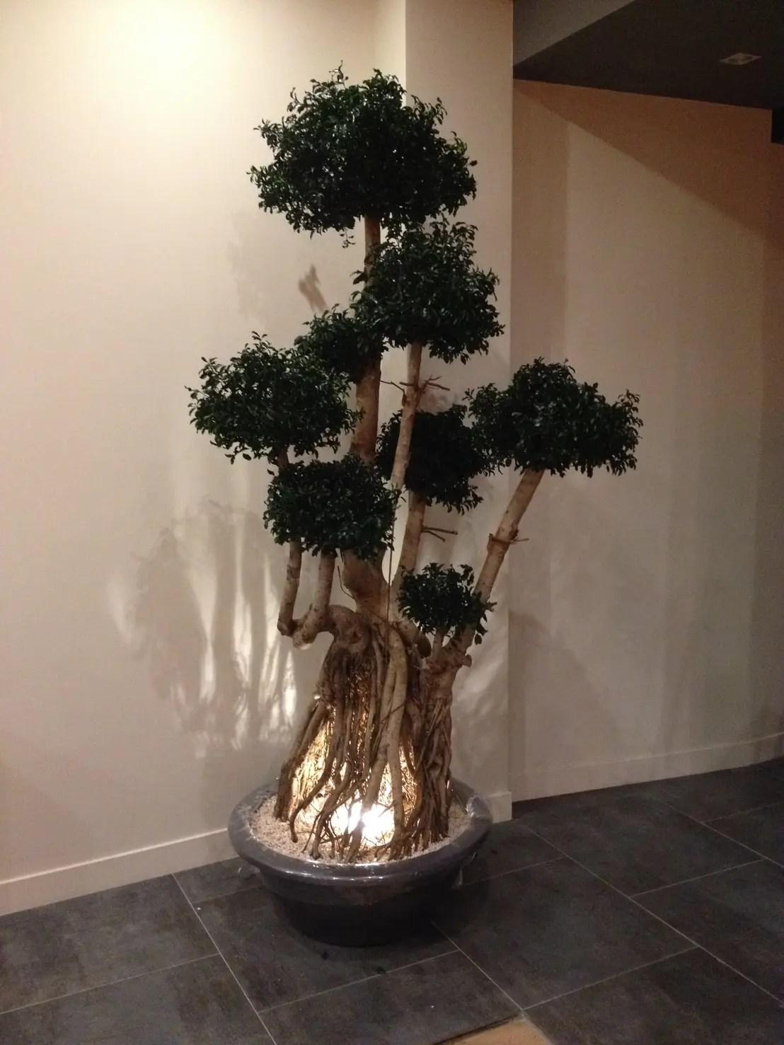 Plantas de interior para una casa sin luz natural
