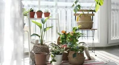 겨울에 키우기 좋은 식물 및 관리법 9