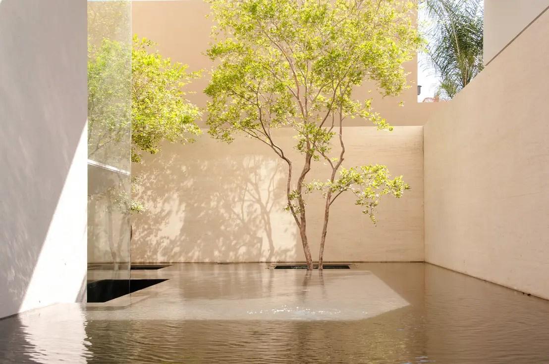 5 jardines con el ms elegante protagonista el rbol