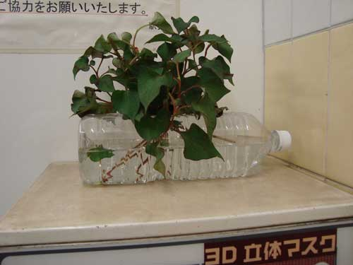 2010-01-12-tokyo_metro_plant_iriya.jpg