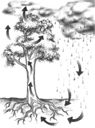 https://i0.wp.com/images.huffingtonpost.com/2010-05-20-tree-water%20cycle-Treewatercycle.jpg?resize=314%2C422