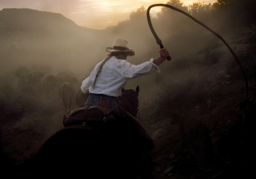 Bull Whip Cattle Drive