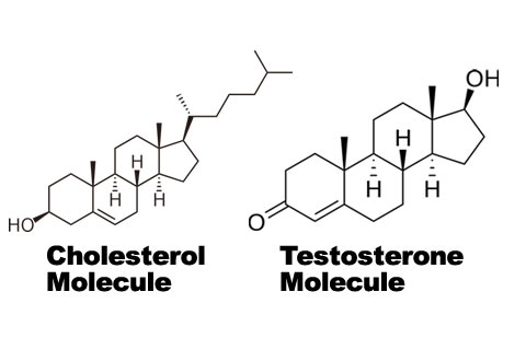 Testosterone: The Magic Molecule That Can Make Us a Hero