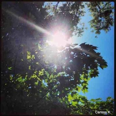 2013-11-05-suntrees.jpg