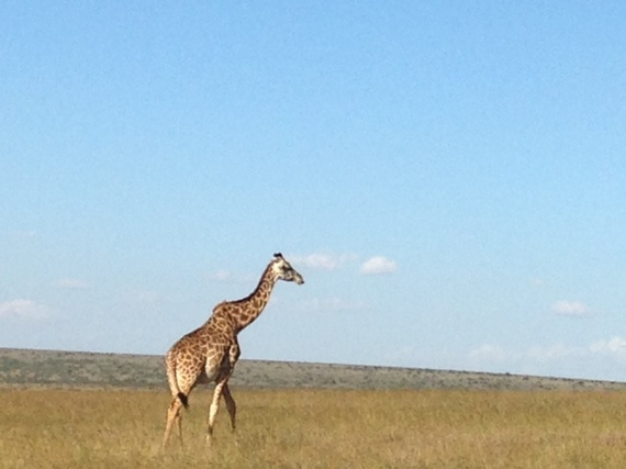 2014-08-22-giraffemasai.jpg