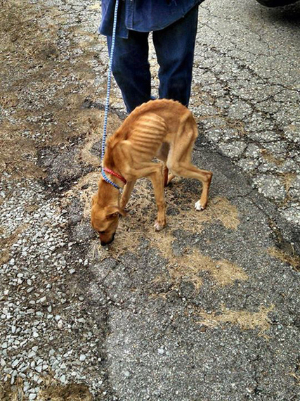 Starving Puppy Found In A Garbage Can After Owner Moves