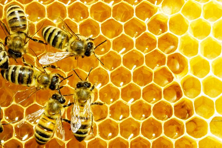 Resultat d'imatges de bees