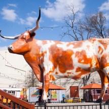 5 Places Austin Weird Huffpost