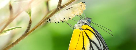 2015-02-27-hpfeb2014_butterfly8x3.jpg