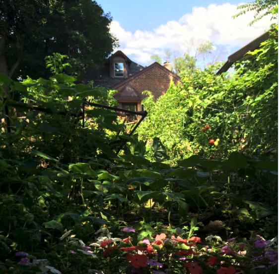 2015-07-31-1438357739-4613724-Garden2.PNG