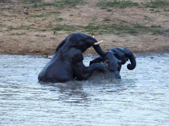 2015-10-09-1444396810-5074199-savingthewild_thula_thula_elephant_utopia_7.jpg