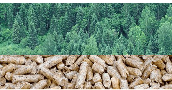 2015-11-03-1446577042-671897-forestsintowoodpelletsmehccr301.png
