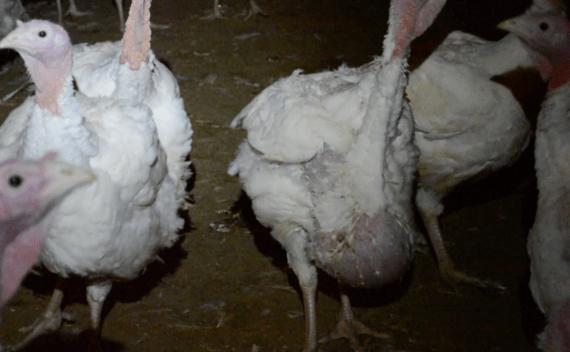 2015-11-25-1448472651-4510560-turkey.png