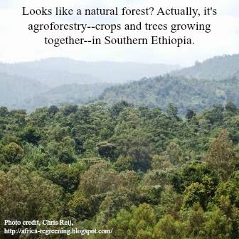 2015-12-02-1449067583-717929-EthiopiaAgroforestry.jpg