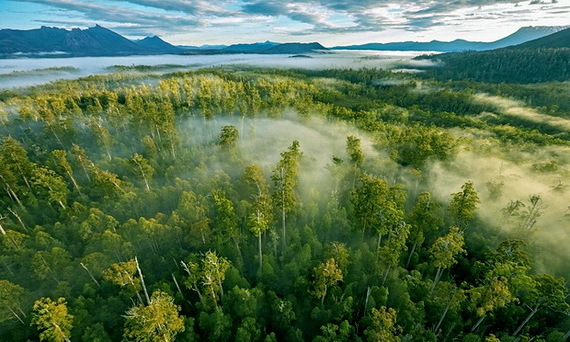 2016-02-16-1455642574-3551799-Tasmaniaunworldheritageforest2CreditRobBlakersatAAPccr316.jpg