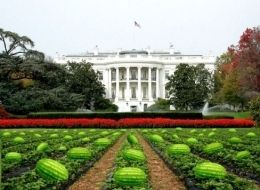 Watermelons on the White House Lawn