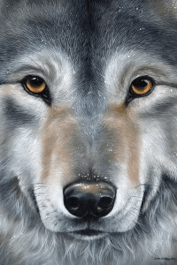 Grey Wolf Face Canvas Wall Art by Sarah Stribbling | iCanvas