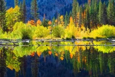 vibrant mountain landscape